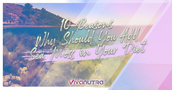 10 Reasons Why Should You Add Sea Moss in Your Diet - Viva Nutra