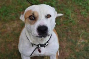 Elvis - Gigi's Rescue Pals! - Shelter Dogs for Adoption