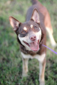 Axelle - Gigi's Rescue Pals! - Shelter Dogs for Adoption