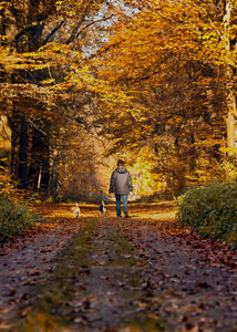 Get Outside This Fall with Your Dog!