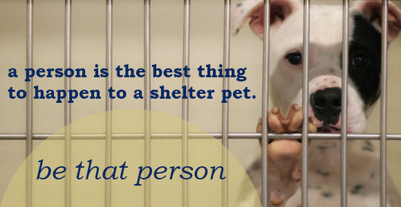 Shelters and Rescues We Love