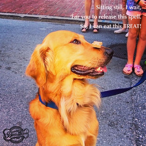 Dog Poetry: Treat