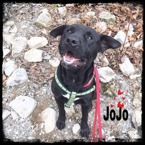 February Dog of the Month: JoJo