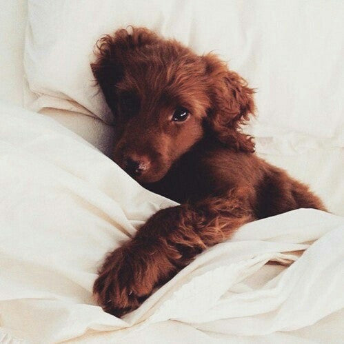Barley Bones Goals // Doing mornings with a Dog