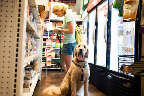 Dog Shopping at Nooga Paws