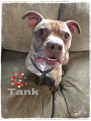 Dog of the Month: Tank