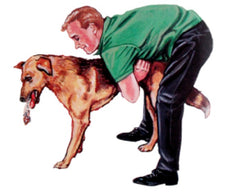 Dog receiving the Heimlich.