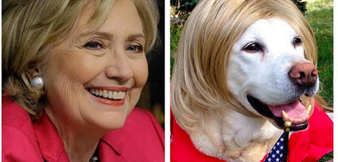 Hillary Clinton dog look alike
