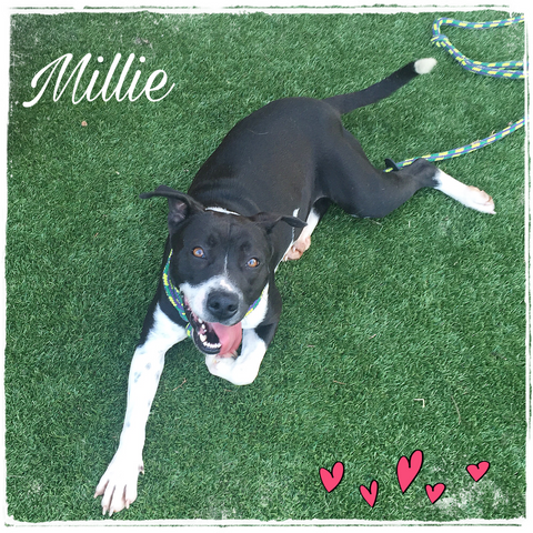 Millie Dog of the Month April