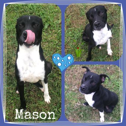 Dog of the Month: Mason