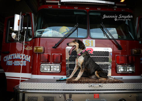 May Dog with Fire Truck
