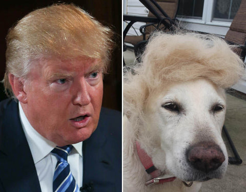 Donald Trump Dog Look Alike