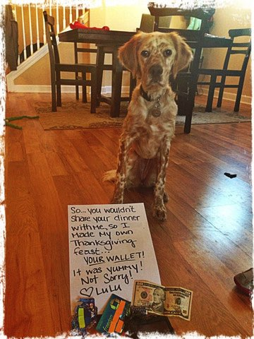 Dog shamed for eating a wallet.