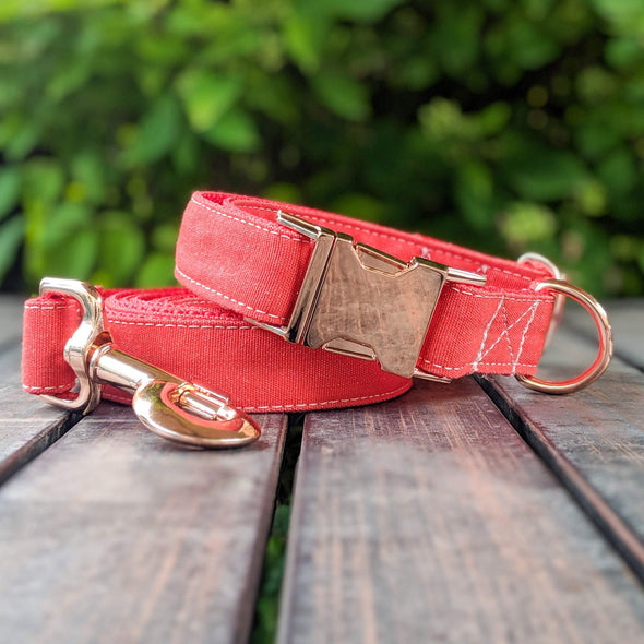 Fuego Red Dog Collar Rose Gold Collection