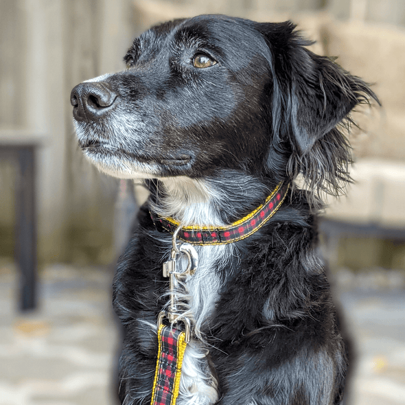 Cozy Cottage Dog Collar and Leash Set