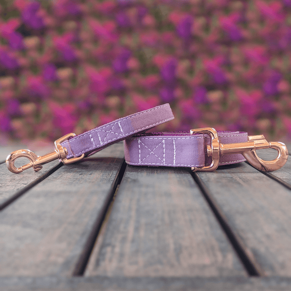 Amethyst Dog Collar and Leash Set Rose Gold Collection