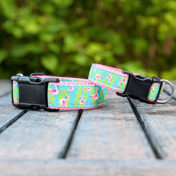 The Galapagos Dog Collar and Leash Set