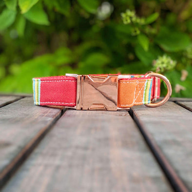Strawberry and Orange Popsicle Dog Collar Rose Gold Collection