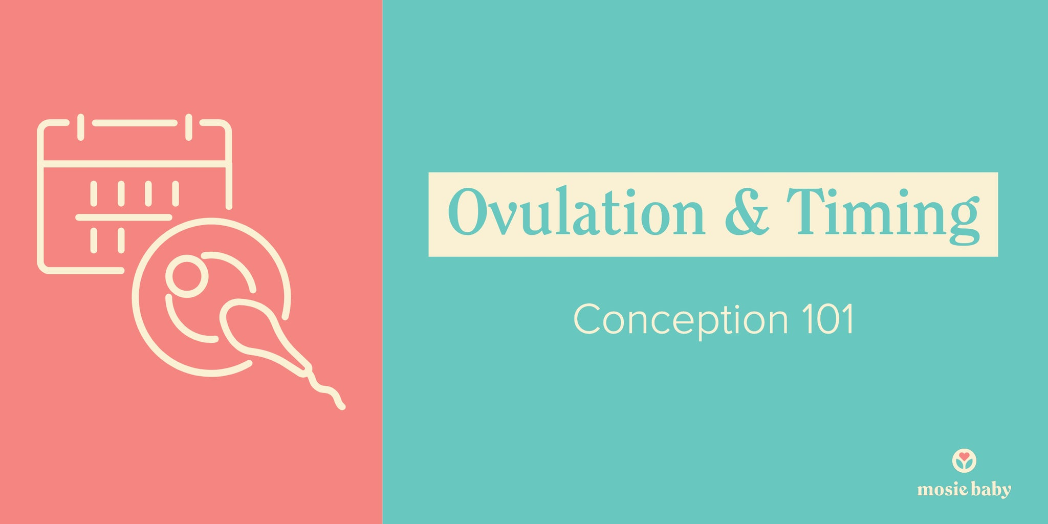 ovulation and timing, conception 101 graphic