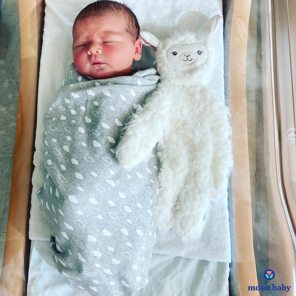 newborn mosie baby in a swaddle