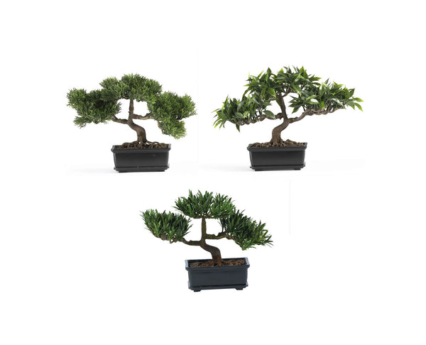 Bonsai Collection 12