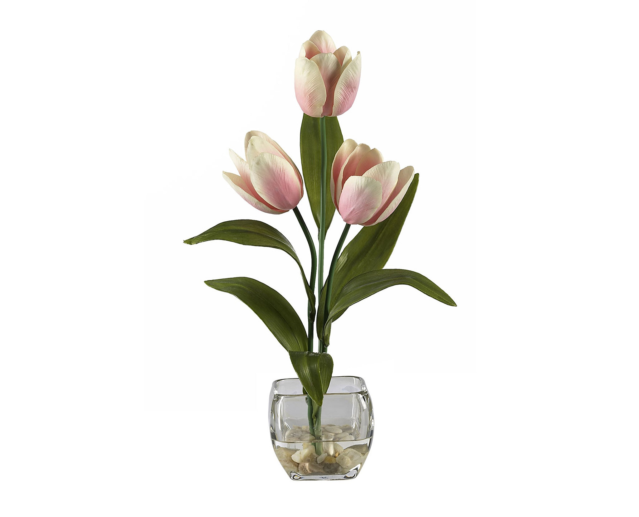 Tulips Cream Pink Flowers