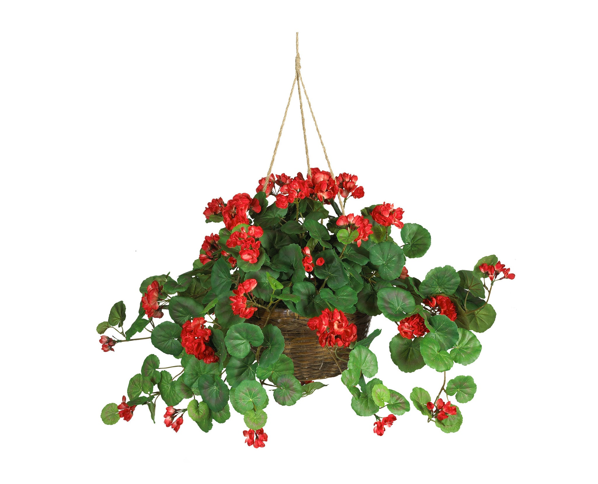 Geranium Red Hanging Baskets