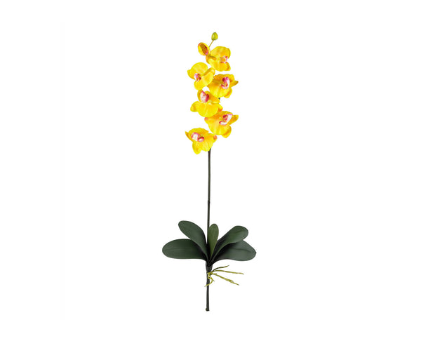 Phalaenopsis Yellow (12)