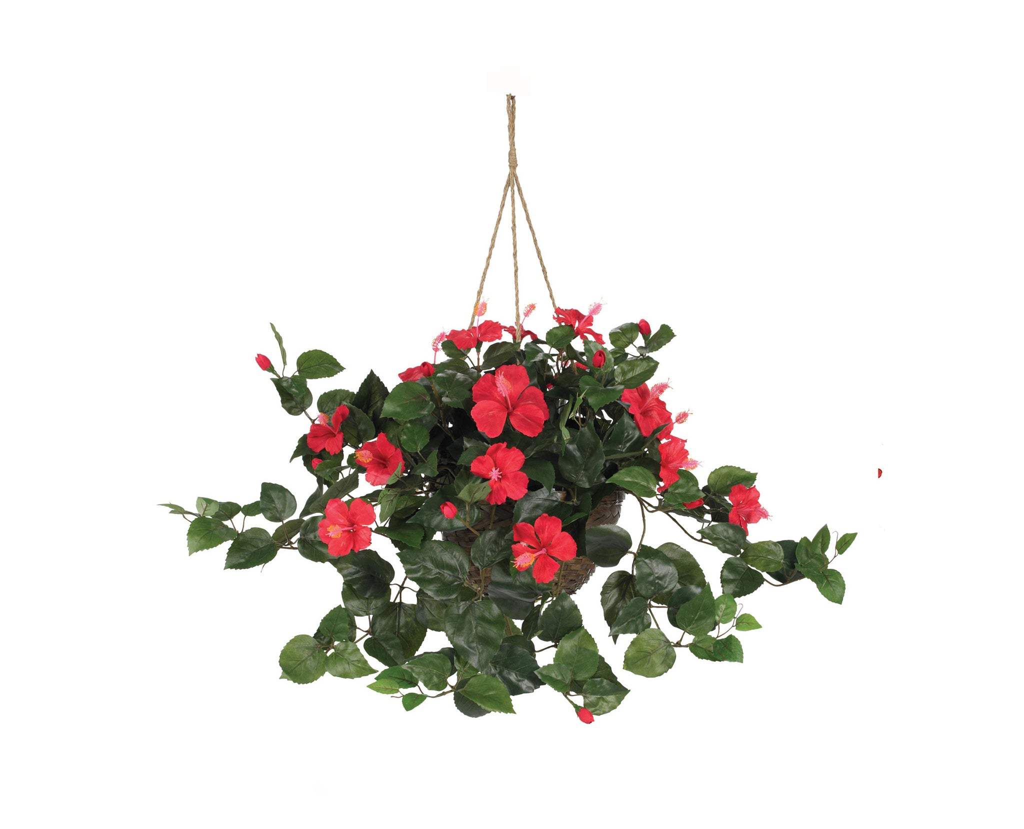 Hibiscus Hanging Baskets