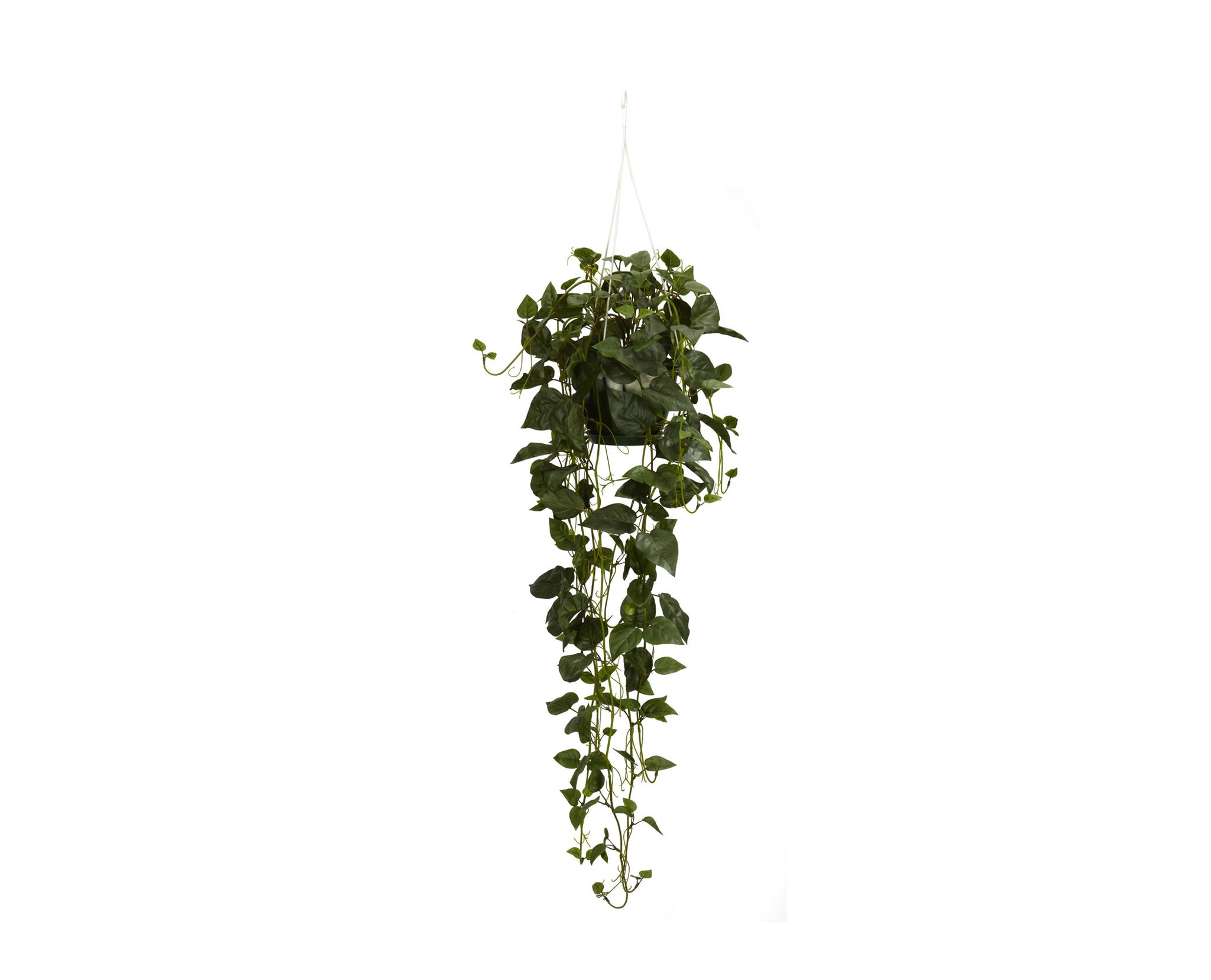 Philodendron Hanging Baskets