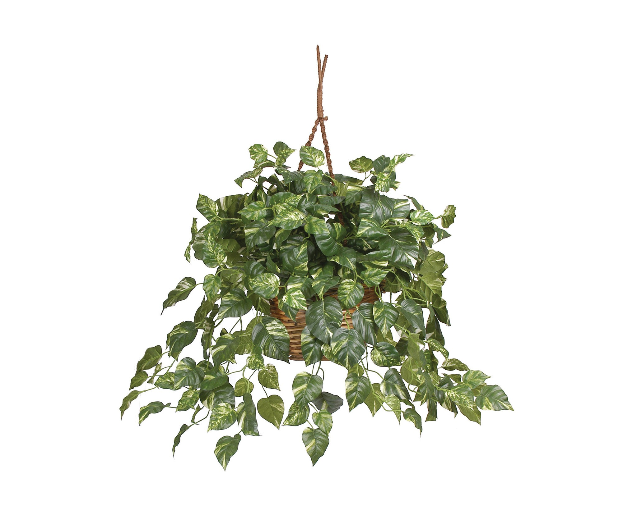 Pothos Hanging Baskets