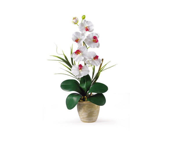 Phalaenopsis White Orchid Flowers