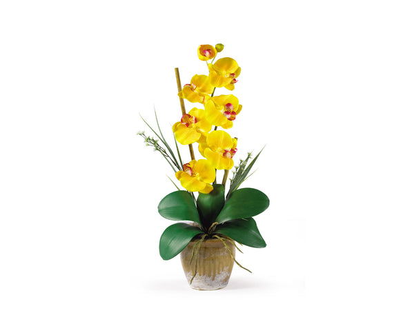 Phalaenopsis Yellow Orchid Flowers