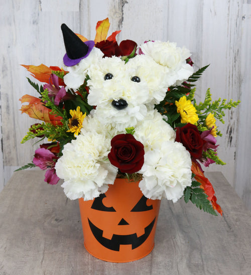 Howl-o-ween Celebrations