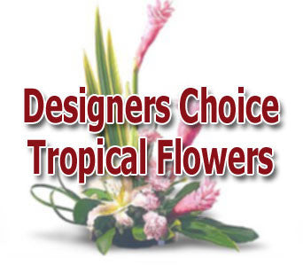 Designer's Choice Tropical