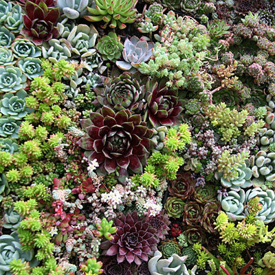 Succulent Gardens Country Elegance Florists