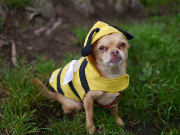 The Bee Costume