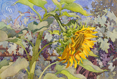 Mammoth Sunflower with Black Manukka, a California watercolor painting by Carolyn Lord. HD giclee art prints for sale at CaliforniaWatercolor.com - original California paintings, & premium giclee prints for sale