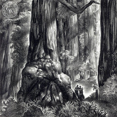 California Redwoods, 1940, California art by James Hollins Patrick. HD giclee art prints for sale at CaliforniaWatercolor.com - original California paintings, & premium giclee prints for sale