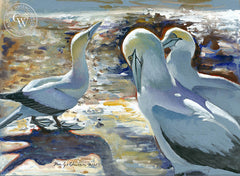 Gannet Colony in New Zealand, California art by Ken Goldman. HD giclee art prints for sale at CaliforniaWatercolor.com - original California paintings, & premium giclee prints for sale