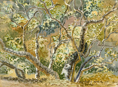 Sycamore Forest, 1955, California art by Tom Van Sant. HD giclee art prints for sale at CaliforniaWatercolor.com - original California paintings, & premium giclee prints for sale