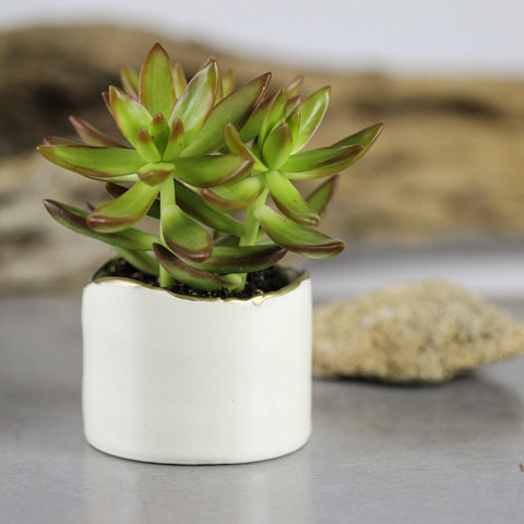 White Minimal Ceramic succulent cactus planter with gold line