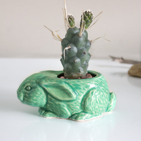 Lucky rabbit ceramic planter in mint green