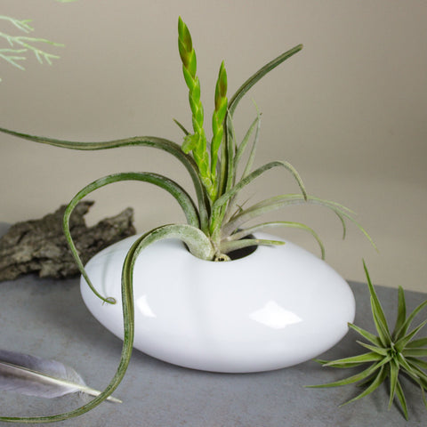 White Ceramic Oval Vase, Choose Size