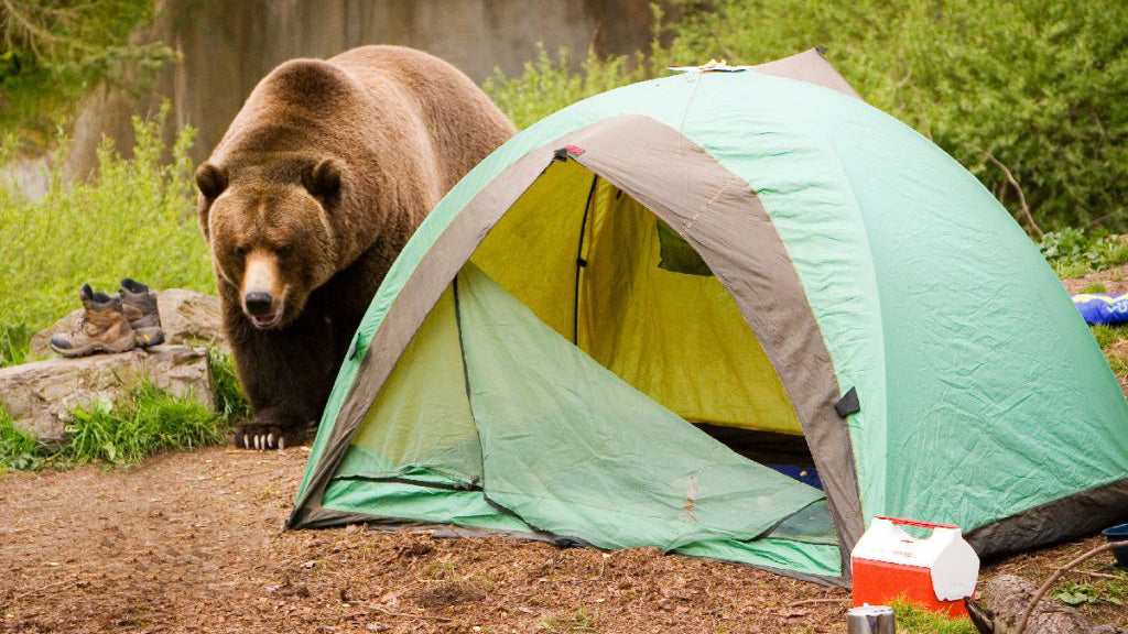 How to Avoid Wild Animals Around Your Camping Site