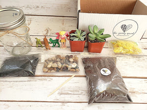 Build-A-Terrarium Kit