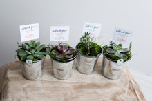 Load image into Gallery viewer, Succulent Favors