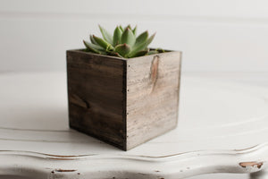 Build a Succulent Box