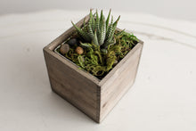 Load image into Gallery viewer, Succulents