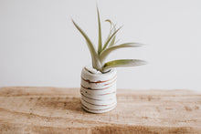 Load image into Gallery viewer, Air Plant Vase